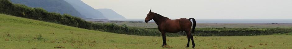 porlock pony